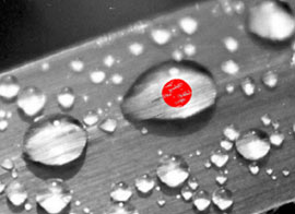 black and white leaf with drops picture with a red circle in a drop